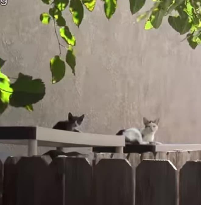 Завидев волонтёров, кошка бросилась бежать, а её дочка осталась. Это помогло спасти обеих
