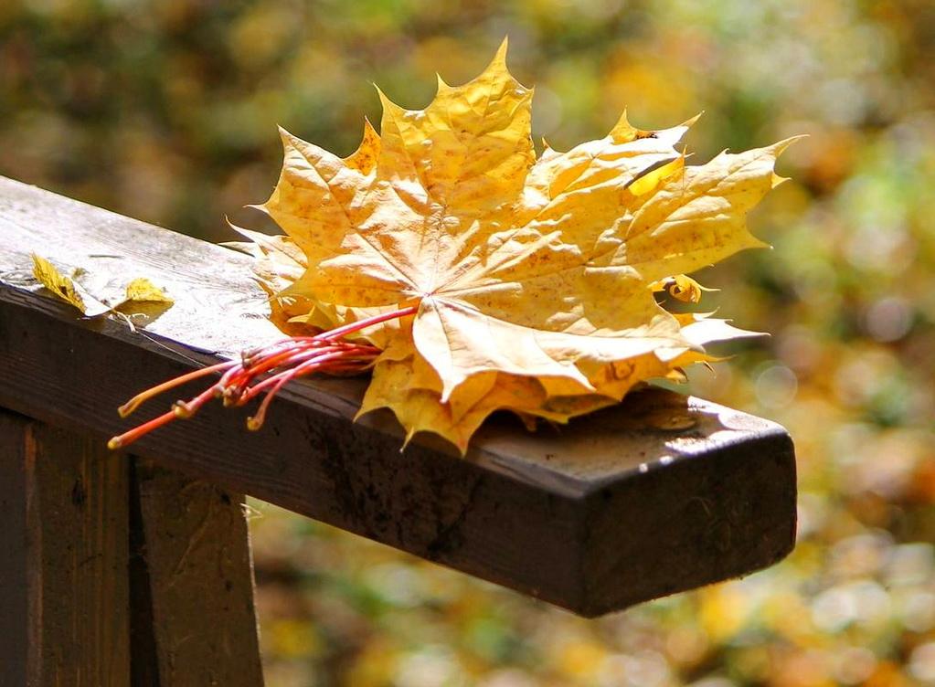 Осень.Как красиво она умеет выбрасывать мусор