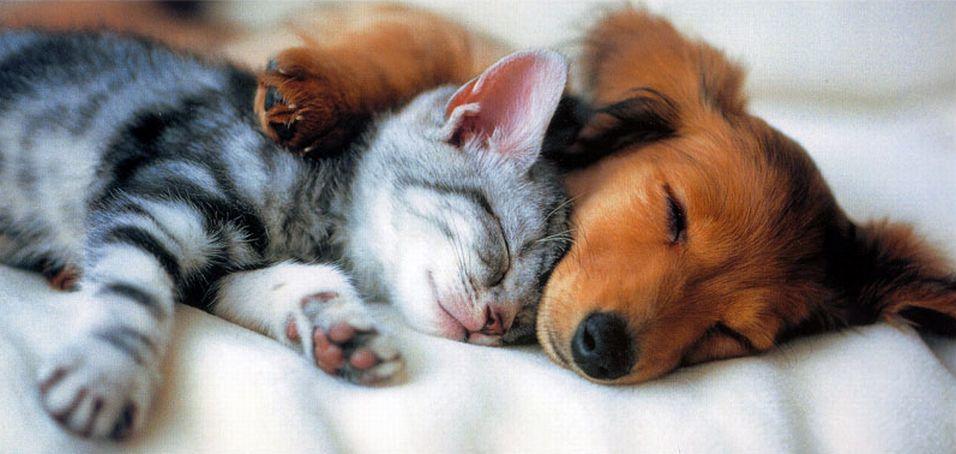 Море нежности и позитива - кошка и собака