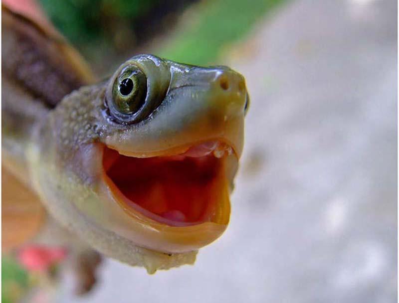 Пост обожания черепашек: милые и забавные черепахи в честь Дня ниндзя