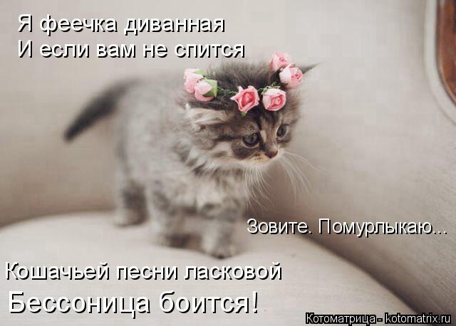 Котоматрица: Я феечка диванная И если вам не спится Зовите. Помурлыкаю... Кошачьей песни ласковой Бессоница боится!