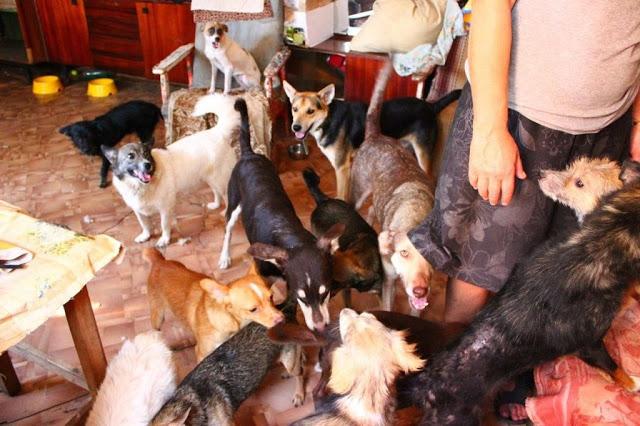 20 собак содержит владелица в 2-х комнатной квартире...