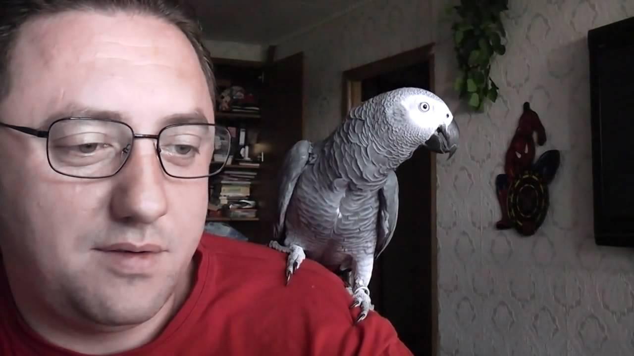 Попугай гавкает, дает лапу и лезет целоваться! Звезда Сети птичка Григорий — удивительный собеседник!