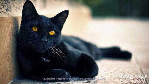 Народные поверья, связанные с котами