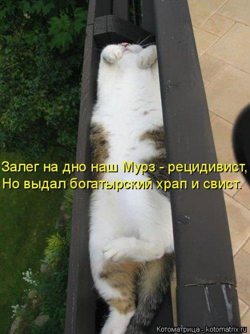 Свежая котоматрица (39 шт)