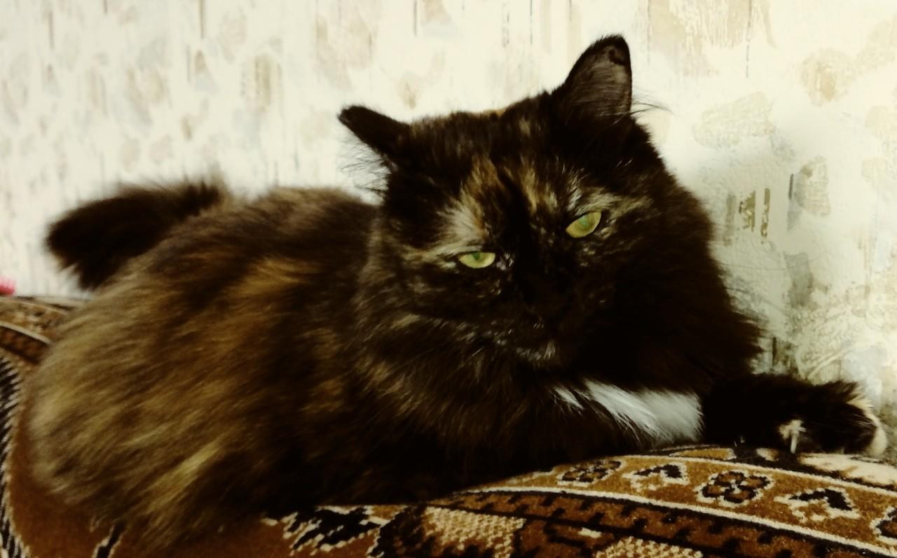 Кошка-аристократка