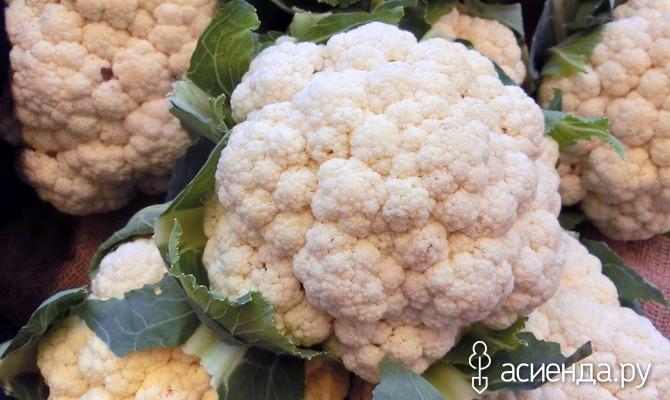 Кудрявые головки цветной капусты