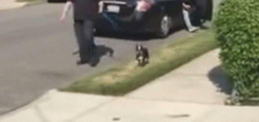 """Собака """"думала"""", что она на обычной прогулке. Но тут она увидела, кто идет навстречу"""