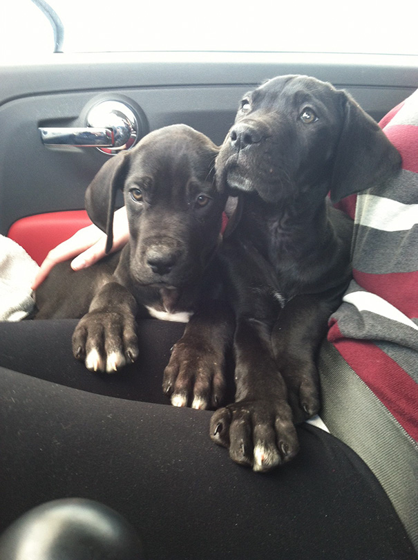 20+ Adorable Puppies To Celebrate National Puppy Day