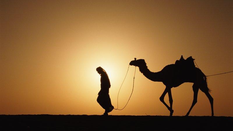 Правила жизни бедуина