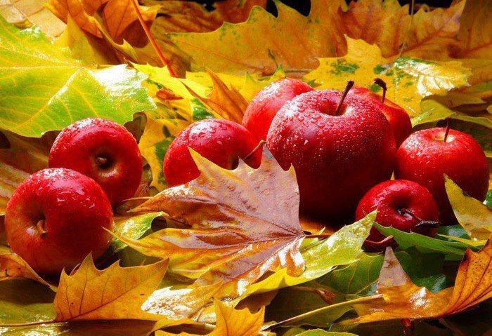 Лучшие сорта осенних яблок