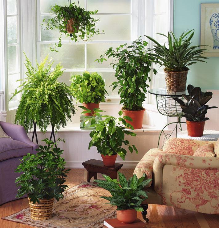 Подкармливайте комнатные растения правильно!