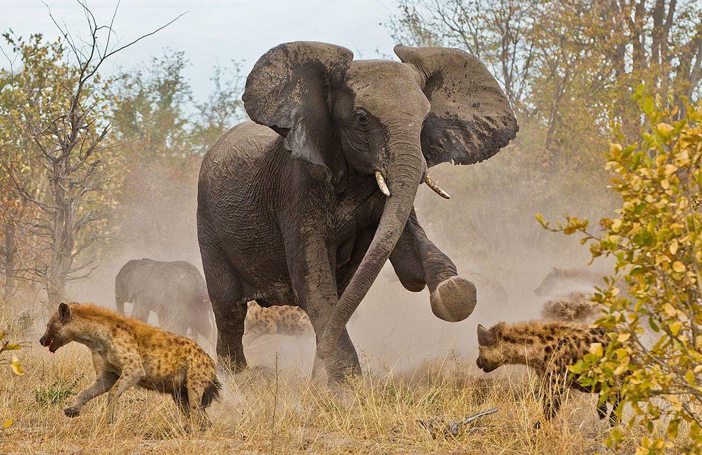 "ЛУЧШИЕ ФОТО  ОТ   ЖУРНАЛА ""National Geographic"",2013"