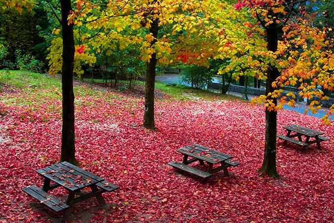 Ковер красных листье в португальском парке Пенеду-Жареш