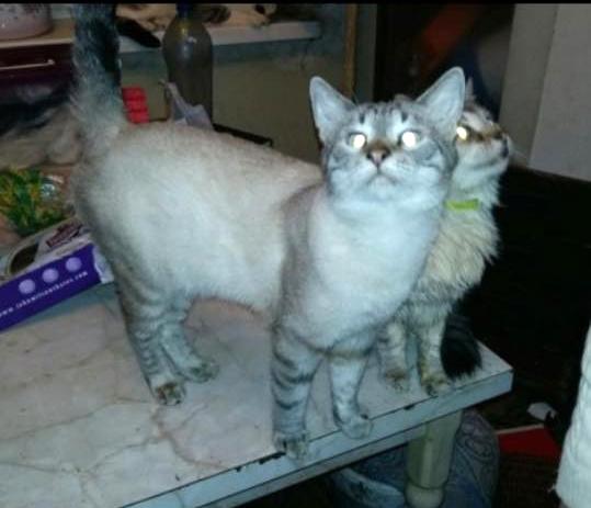 Москва! 27 кошек в беде!
