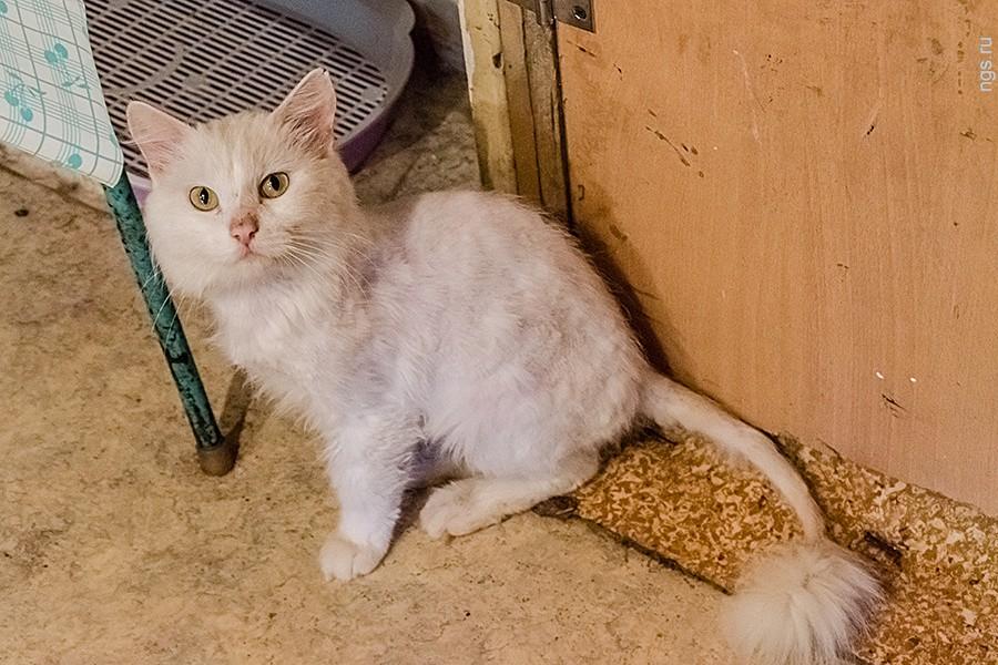 «Я назвала его Гитлер и стала лечить» дом, животные, коты, новосибирск