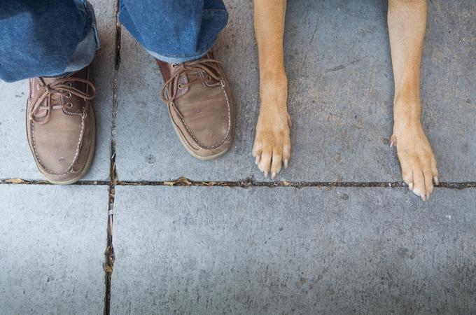 """Американский фотограф Алекс Бекер снял забавную серию фотографий под названием """"Ноги и лапы""""."""