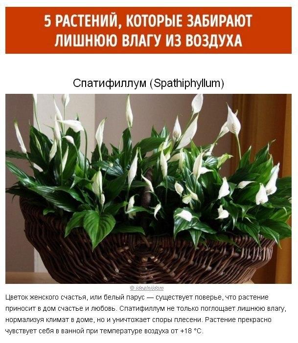 Растения для идеального микроклимата в доме