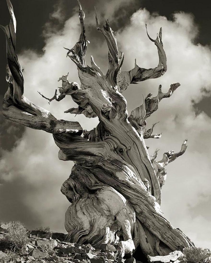 Деревья древние как мир в фотографиях из 14-летнего путешествия-15