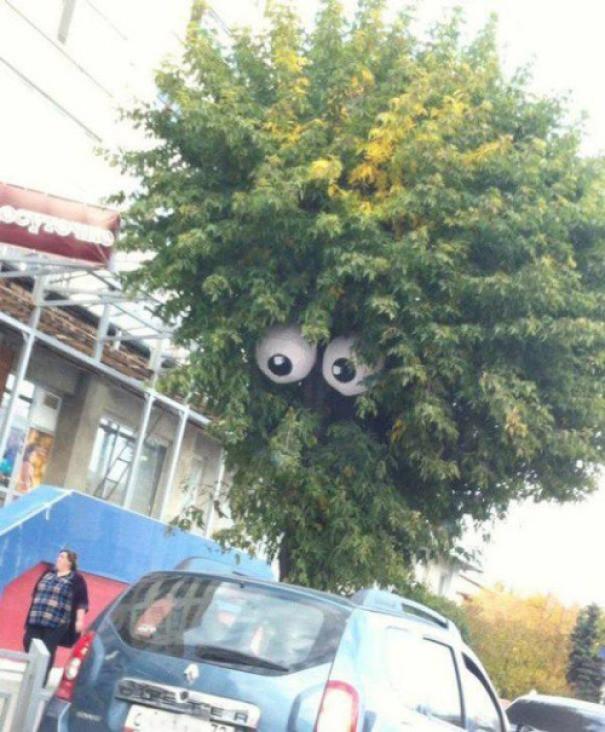 Глазастое дерево вандализм, граффити, инсталляция, искусство, мир, творчество, улица, художник