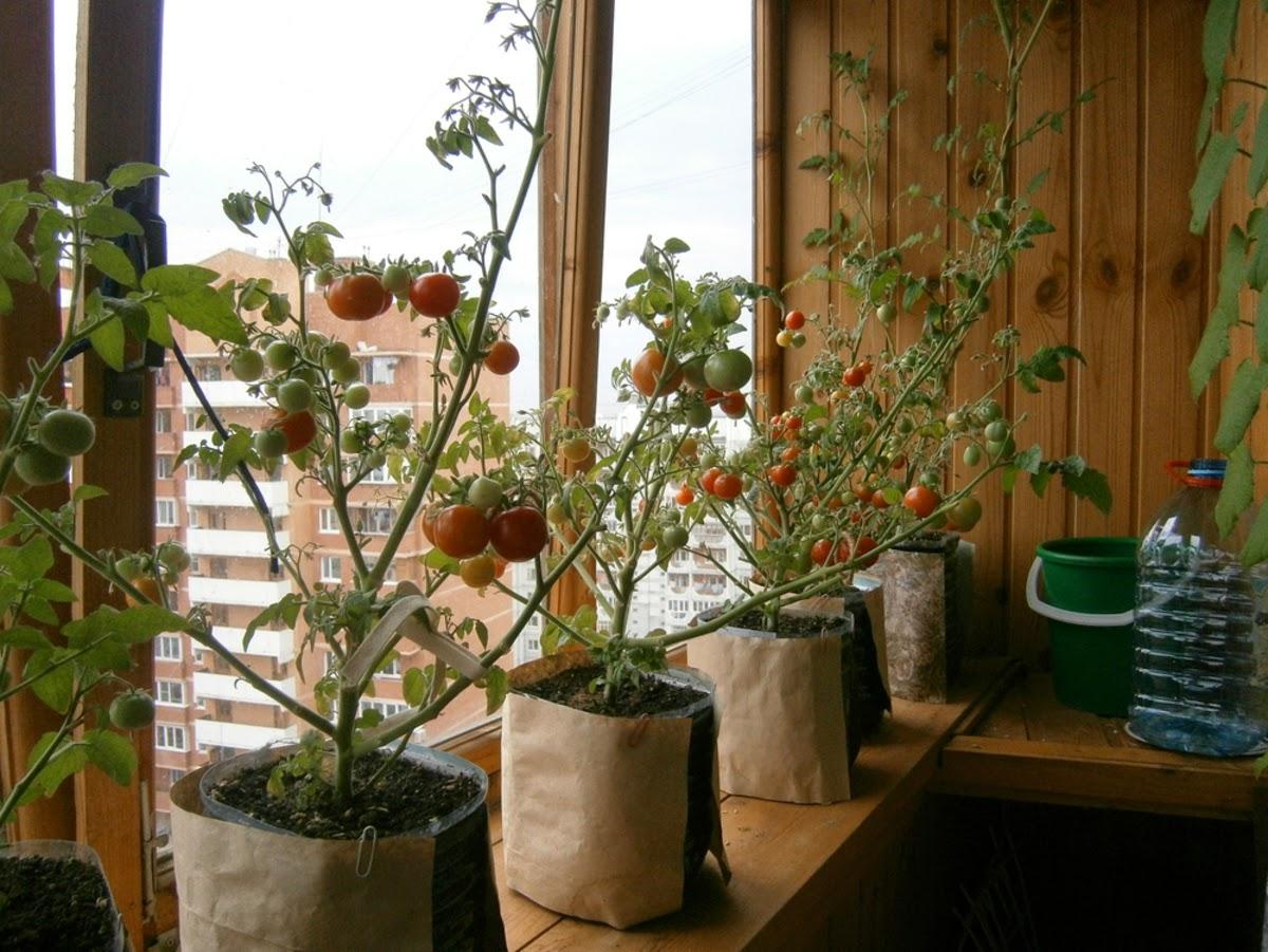 """Блог сайта """"огород, сад, балкон""""."""
