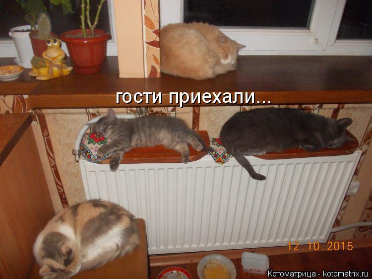 Котоматрица: гости приехали...