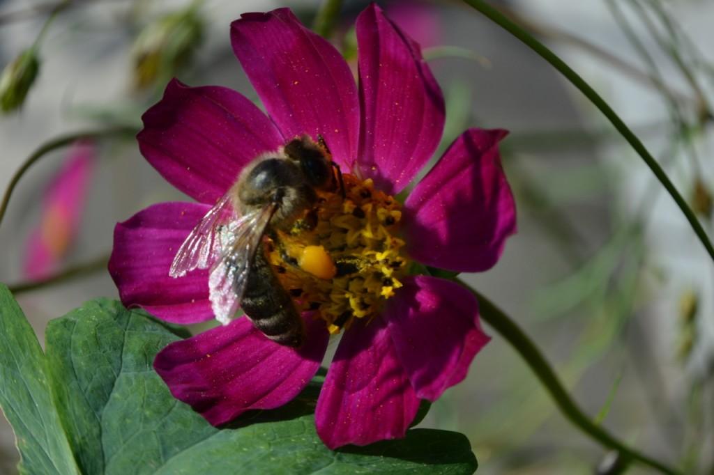 Пчелка трудяга