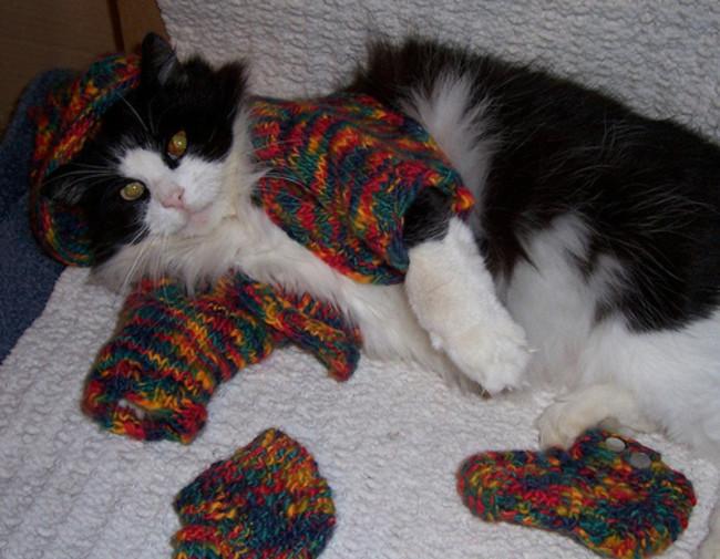 Настоящий модник кардиган, кот