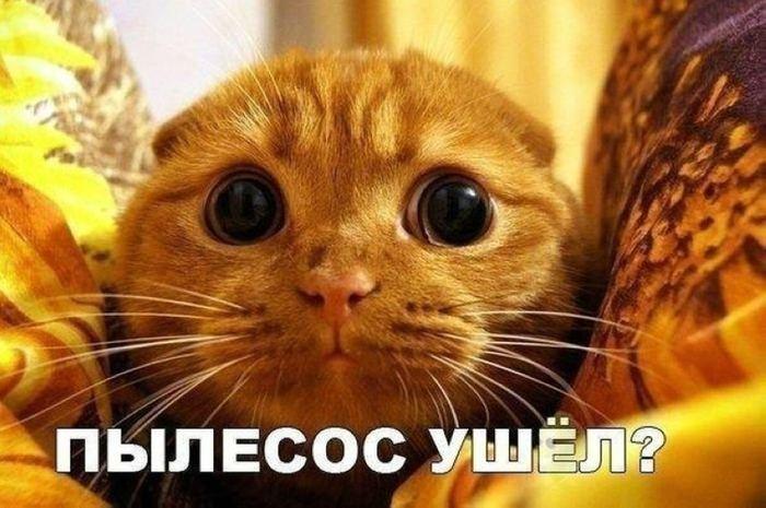 http://mtdata.ru/u25/photoAF18/20330771782-0/original.jpg#20330771782