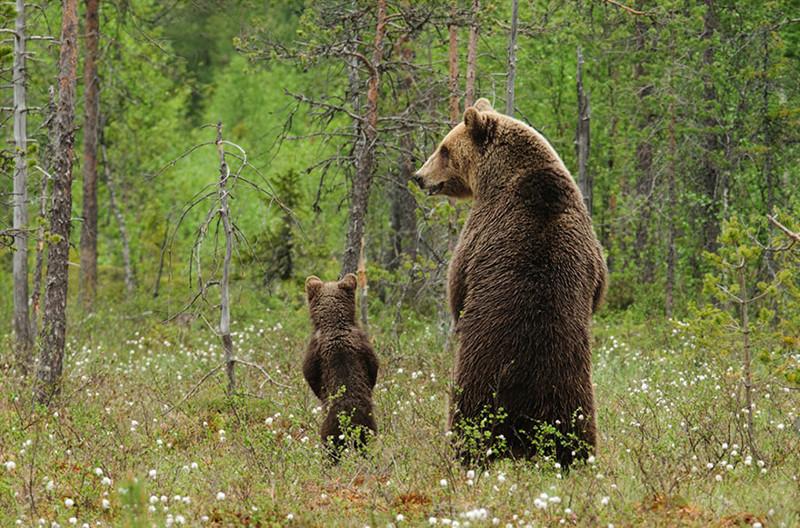 25 моментов, когда животные-родители повели себя совсем как люди