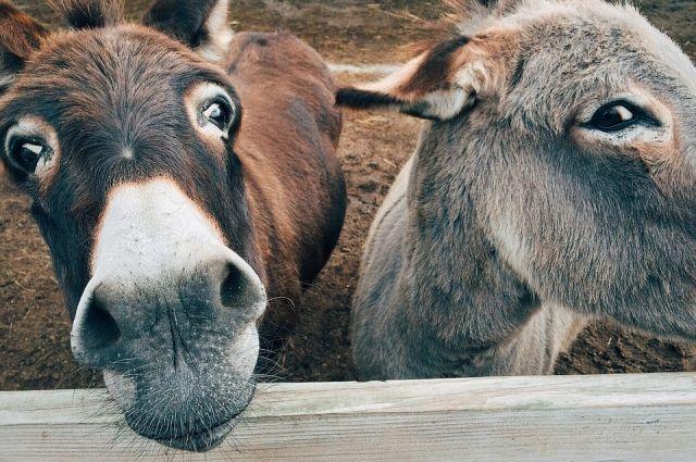 Жители Альметьевска пожаловались на ночные крики осла из зоопарка