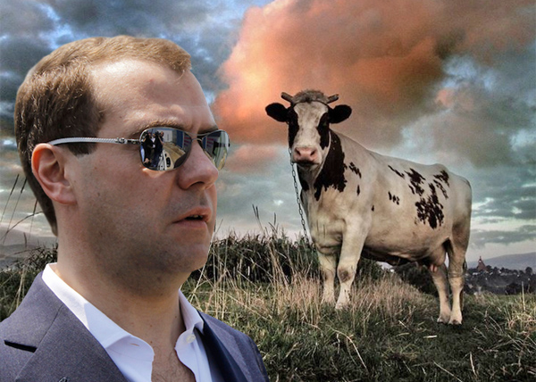 Медведеву мешают коровы. Громко мычат. И какают