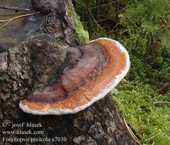 О чем думают грибы?
