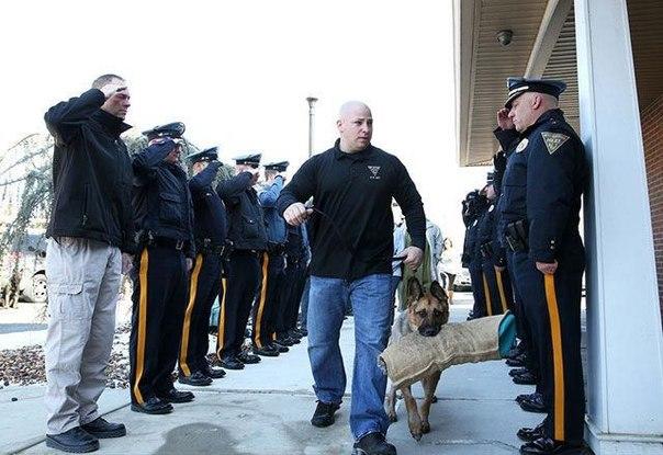Офицеры прощаются с неизлечимой собакой из отряда K9, которую ведут к ветеринару на усыпление