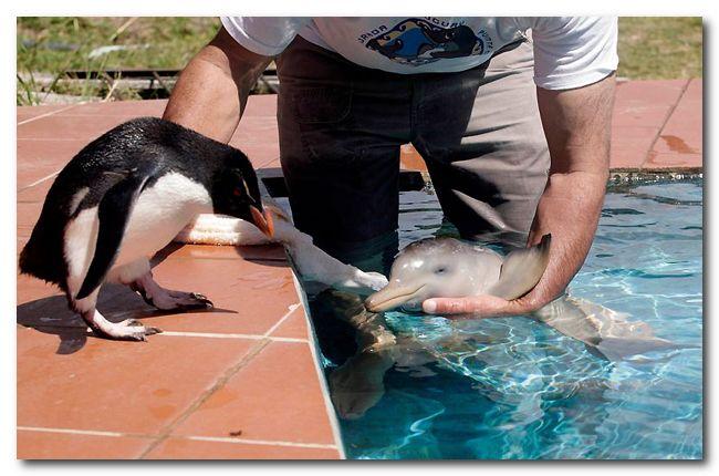 Дружба пингвина и маленького дельфиненка