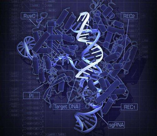 Техника CRISPR Cas9
