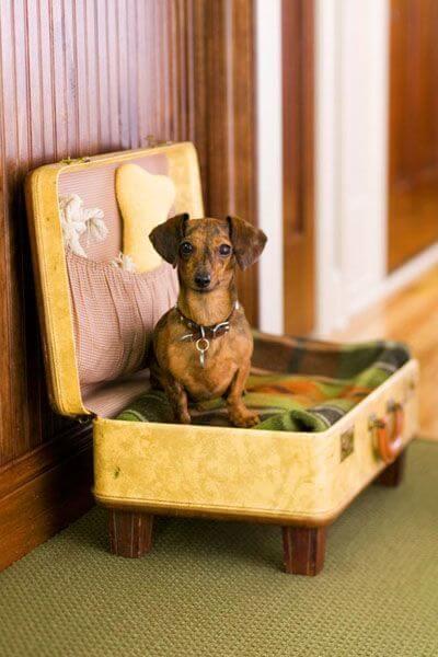 Место для собаки из чемодана