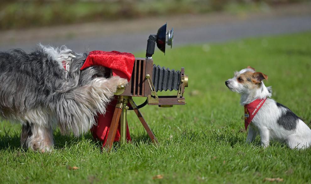Умелый фотограф. животные, жизнь, позитив, эмоции