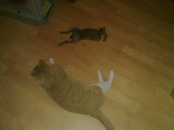 Кролика завалил и домой припер. Кормилец))) кот, охота, рыжий