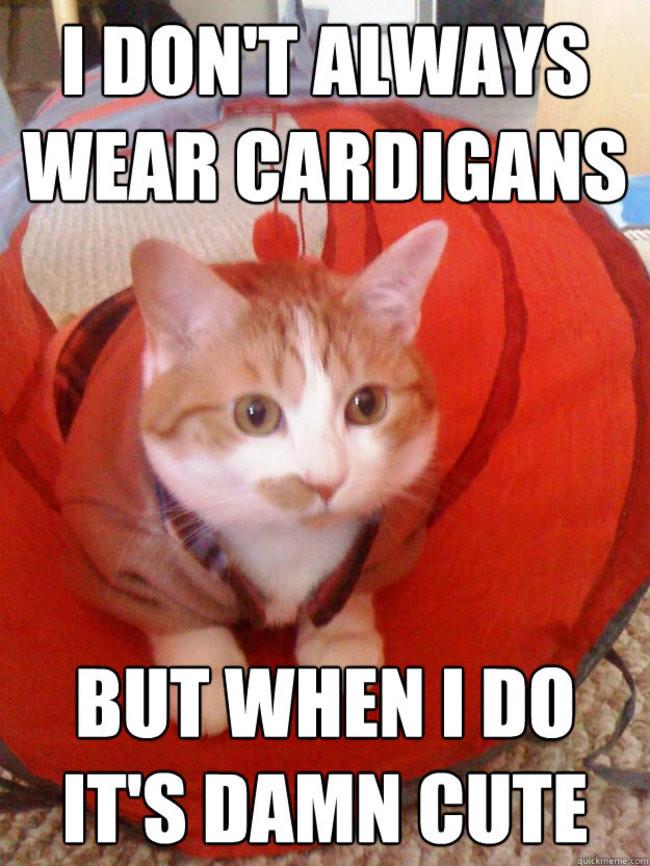 Я не всегда надеваю свитеры, но если и надеваю, то это невероятно мило кардиган, кот