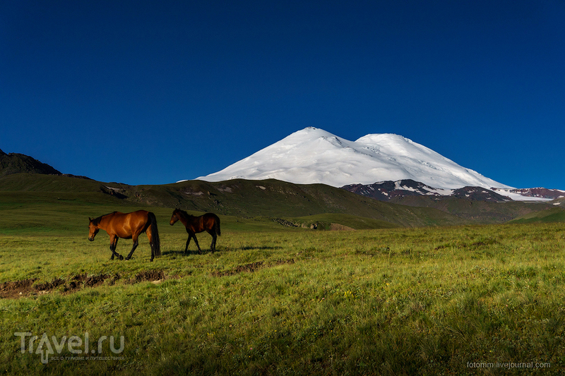 Кавказ. Утренние кони