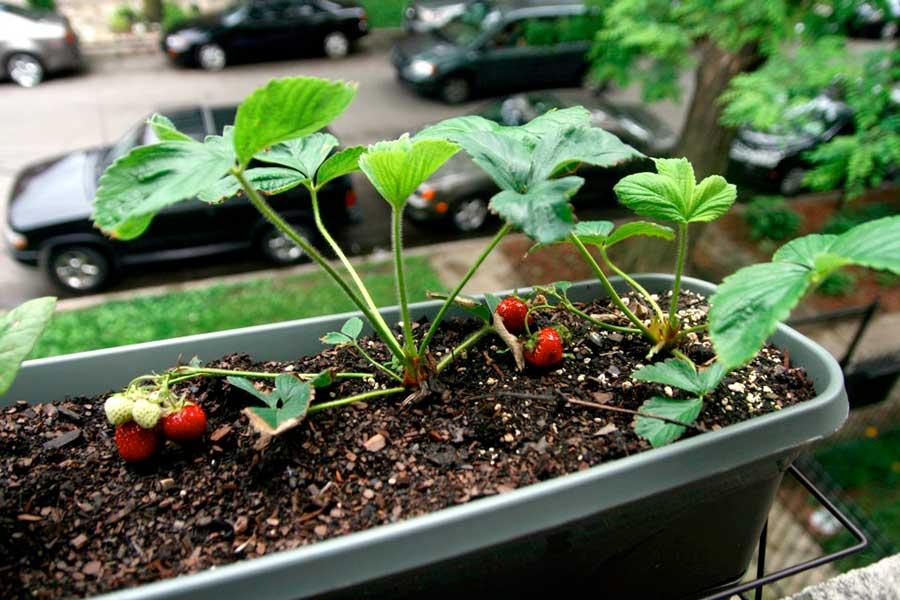 Как выращивать овощи на своем подоконнике