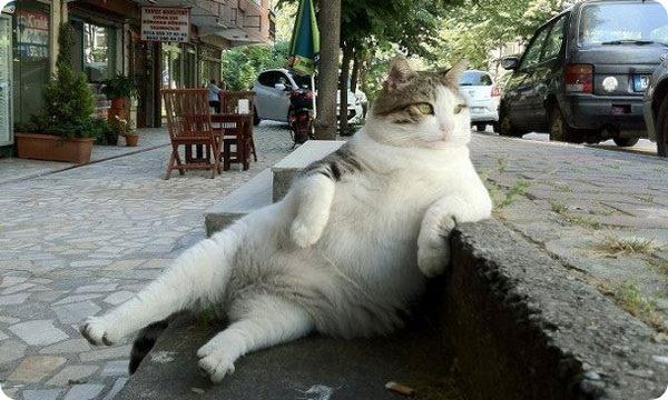 Кот потерял всякий интерес к жизни