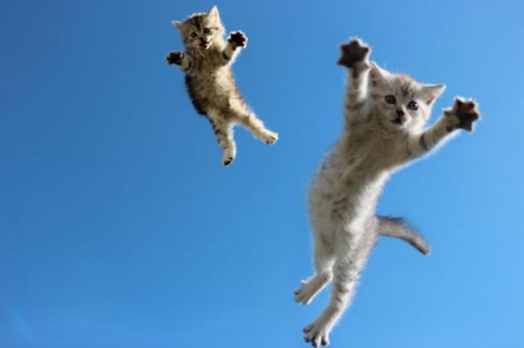 Вот бы лежать так на травке, а сверху на тебя падают пушистые котята.