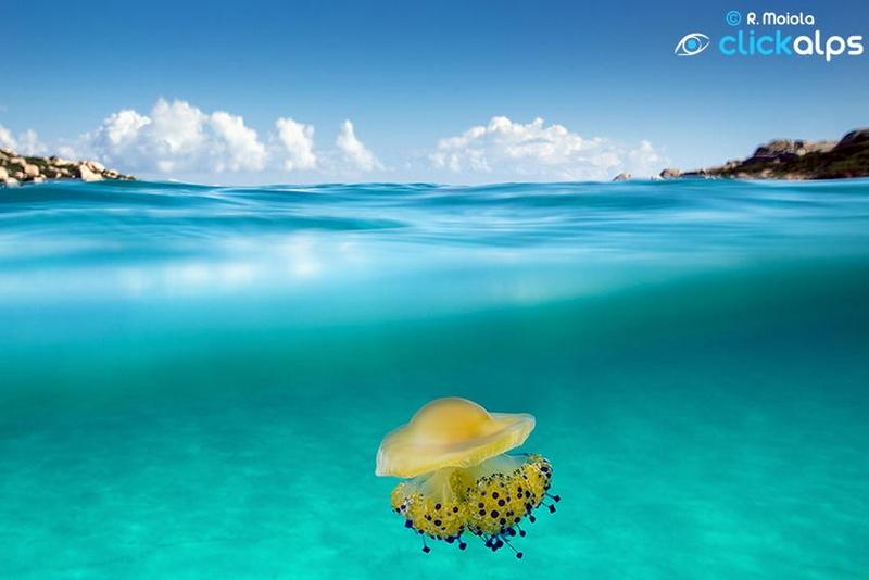 Imagens fantásticas da água-viva