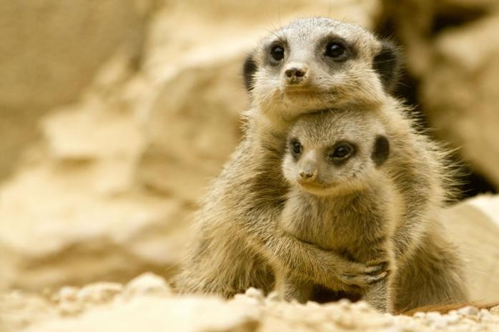 30 фото, которые доказывают, что животные тоже любят свои семьи