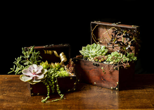 Композиции из суккулентов уместны не только в саду, но и дома