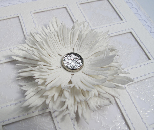 white fringe flower