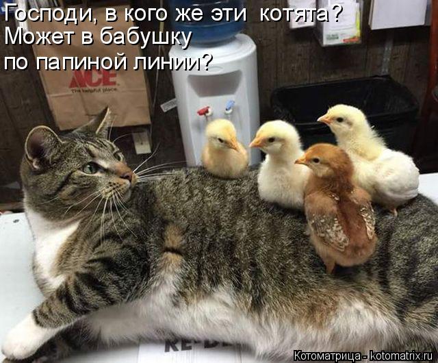 Котоматрица: Господи, в кого же эти  котята? Может в бабушку  по папиной линии?