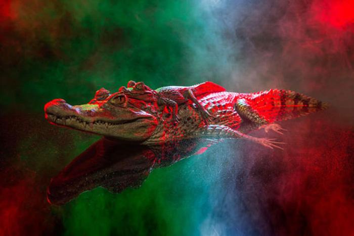 Изумительные портреты рептилий.  Автор фото: Andrew McGibbon.
